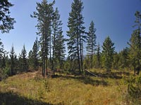 40 Acres of very useable land. Views of Schweitzer and the Selkirk Mountain Range in Sandpoint, Idaho